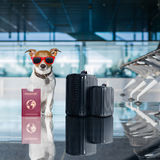 Dog in airport terminal on vacation Royalty Free Stock Photos
