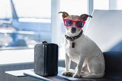 Dog in airport terminal on vacation Royalty Free Stock Image