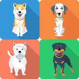Dog Akita Inu,  Dalmatian, Rottweiler and West Stock Image