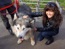 Dog Alaskan Malamute and young woman Stock Photos