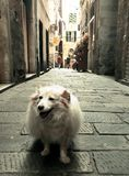 The dog of the alley royalty free stock photos