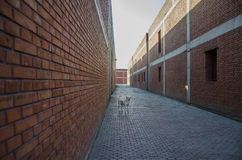 A dog in the alley Stock Photography
