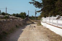 Dog alone Royalty Free Stock Image