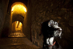 Dog alone in historical street. In Girona, Spain Royalty Free Stock Image