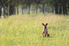 Dog alone Stock Photography