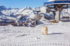 Dog in Alps Stock Photography
