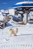 Dog in Alps Royalty Free Stock Photography