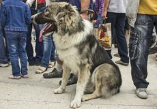 A dog amoung people. Stock Image