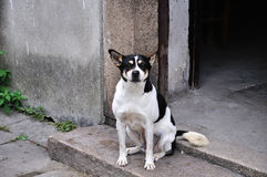 Dog. The ancient city of Suzhou is the famous Jiangnan water, city water staggered in Hong Kong, street aspect, the late Tang Dynasty poet Du Xunhe had a poem Stock Images