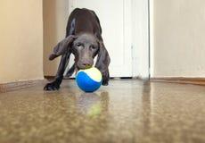 Free Dog And Ball Stock Photo - 16767060