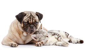 Free Dog And Cat Stock Photo - 11097620