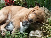 Free Dog And Cat Royalty Free Stock Image - 7661886