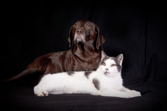 Free Dog And Cat Royalty Free Stock Photos - 7723138