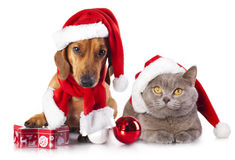Dog And Cat And Kitens A Santa Hat Stock Photos
