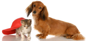 Free Dog And Cat Friendship Royalty Free Stock Image - 11281606