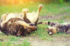 Free Dog And Cat Playing Together Stock Photography - 101256042