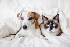 Free Dog And Cat Under White Blanket Stock Photos - 179216673