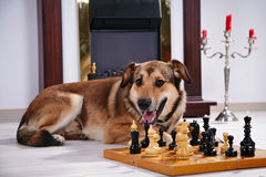 Free Dog And Chess Against A Fireplace. Royalty Free Stock Photos - 35640788