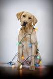 Dog And Christmas Lights Royalty Free Stock Photography