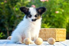 Dog And Eggs Royalty Free Stock Photos