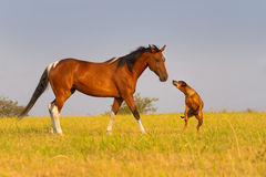 Free Dog And Horse Royalty Free Stock Photography - 47203537