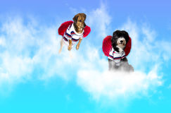 Dog angel Royalty Free Stock Images