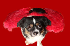 Dog angel. Little dachshund wearing an angel costume Stock Photography