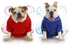 Dog angels Stock Images