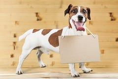 Dog animal Stock Photos