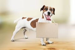 Dog animal Royalty Free Stock Image
