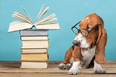 Dog. Animal book law adorable background beautiful Stock Image