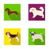 Dog, animal, domestic, and other web icon in flat style.Dachshund, maltese, bulldog icons in set collection. Royalty Free Stock Image