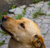 Dog animal mongrel Stock Photo
