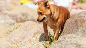 Dog animal pet walking outdoor. Stock Photo