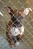 Dog in an Animal Shelter. A cute dog sitting in a kennel at an animal shelter Royalty Free Stock Photos