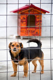 Dog at the animal shelter. Sad mongrel at the animal shelter waiting for owner Royalty Free Stock Photo