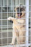 Dog in an animal shelter. Waiting for someone to adopt them royalty free stock images