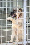Dog in an animal shelter. Waiting for someone to adopt them stock photo