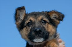 Dog at the animal shelter of Lugano in Switzerland. Dog at the animal shelter of Lugano on Switzerland stock image
