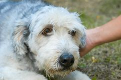Dog at the animal shelter of Lugano in Switzerland. Dog at the animal shelter of Lugano on Switzerland stock photo