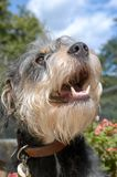 Dog at the animal shelter of Lugano in Switzerland. Dog at the animal shelter of Lugano on Switzerland stock photos