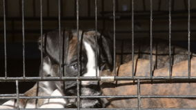 Dog in animal shelter stock video