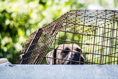 A dog in an animal shelter Stock Images