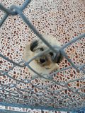 A dog in an animal shelter. Waiting for a home Stock Photo