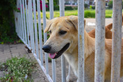 Dog in an animal shelter, waiting for a home. A dog in an animal shelter, waiting for a home Royalty Free Stock Image