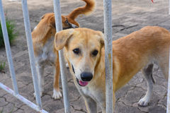 Dog in an animal shelter, waiting for a home. A dog in an animal shelter, waiting for a home Stock Photography