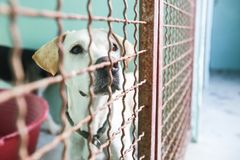 Dog in an animal shelter. Waiting for someone to adopt them royalty free stock image