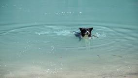 Happy doggie in the water. Dog, animal, water, beach, sea, pet, nature, canine, runs, summer, swim, swim, fun, cute, drama, lake, mammal, sand, wet, black, play Stock Image