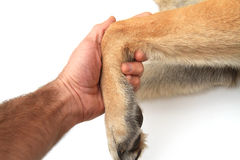 Dog ankle Stock Photo