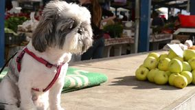 Dog and Apple Stack at Market stock video footage